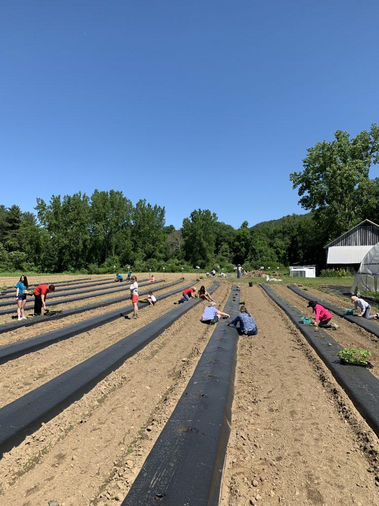 Planting at GG 2019